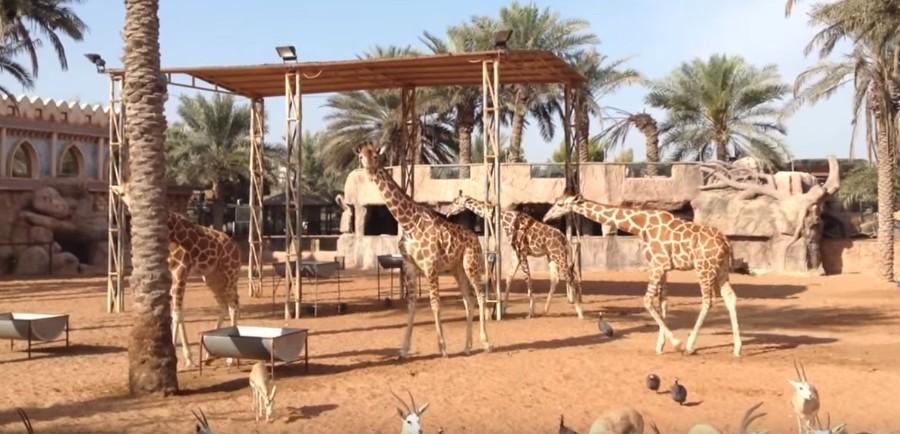 Dubajská Zoo