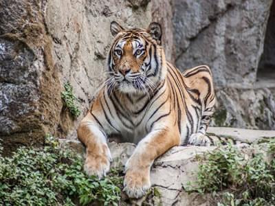 Zoo Dubaj